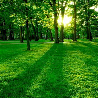 Responsabilidad civil ambiental