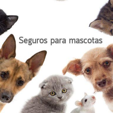 Seguro de mascotas - Grupo Nuño. Asesores en Riesgos.